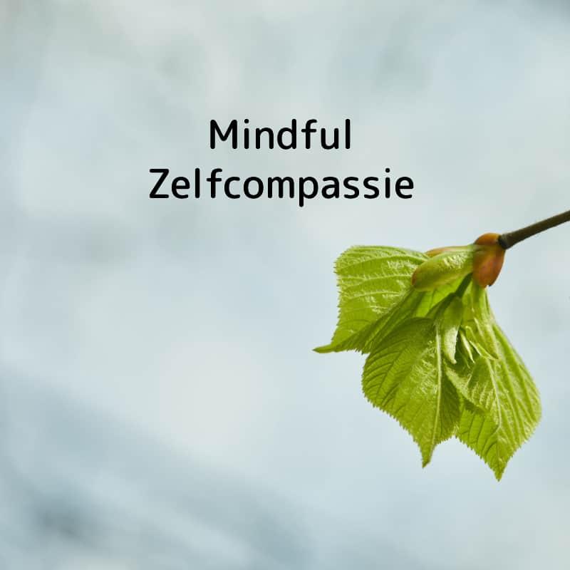 mindful-zelfcompassie-online programma